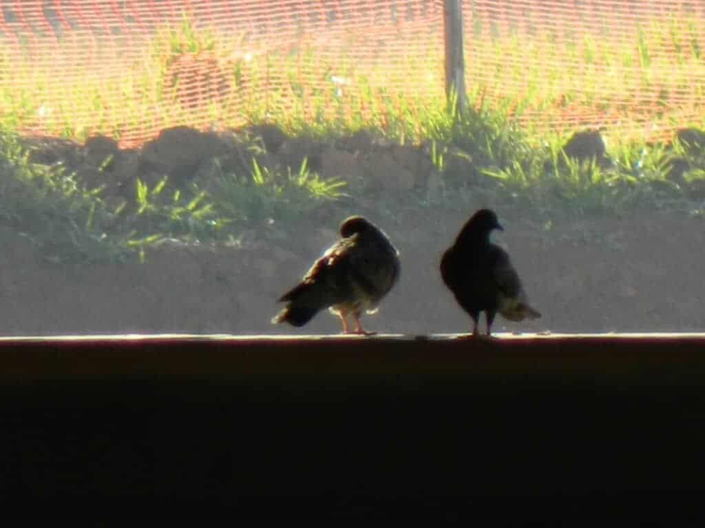 Pássaros admirando a paisagem